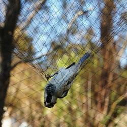شبكة صيد طيور حرير تيلاندي