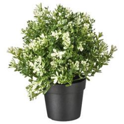 نبات صناعي 9 سم ايكيا