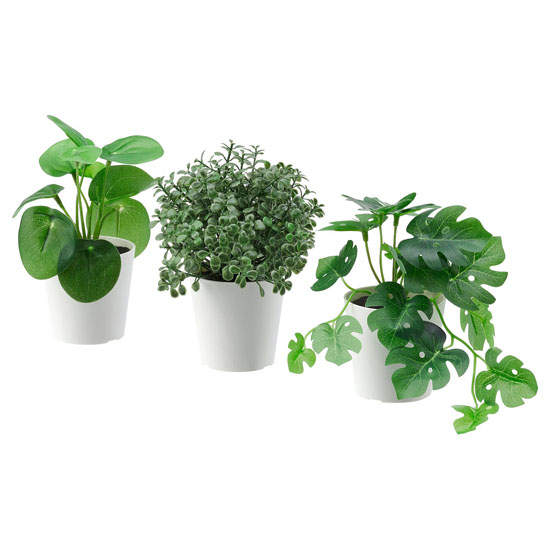 نباتات منزليه ايكيا